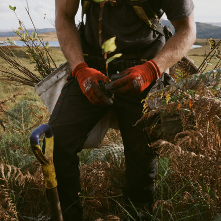 Sustainable Forestry Scotland