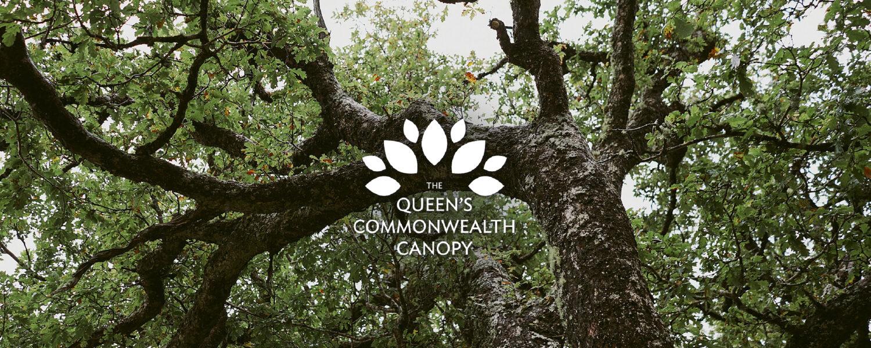 Queen's Commonwealth Canopy Scotland
